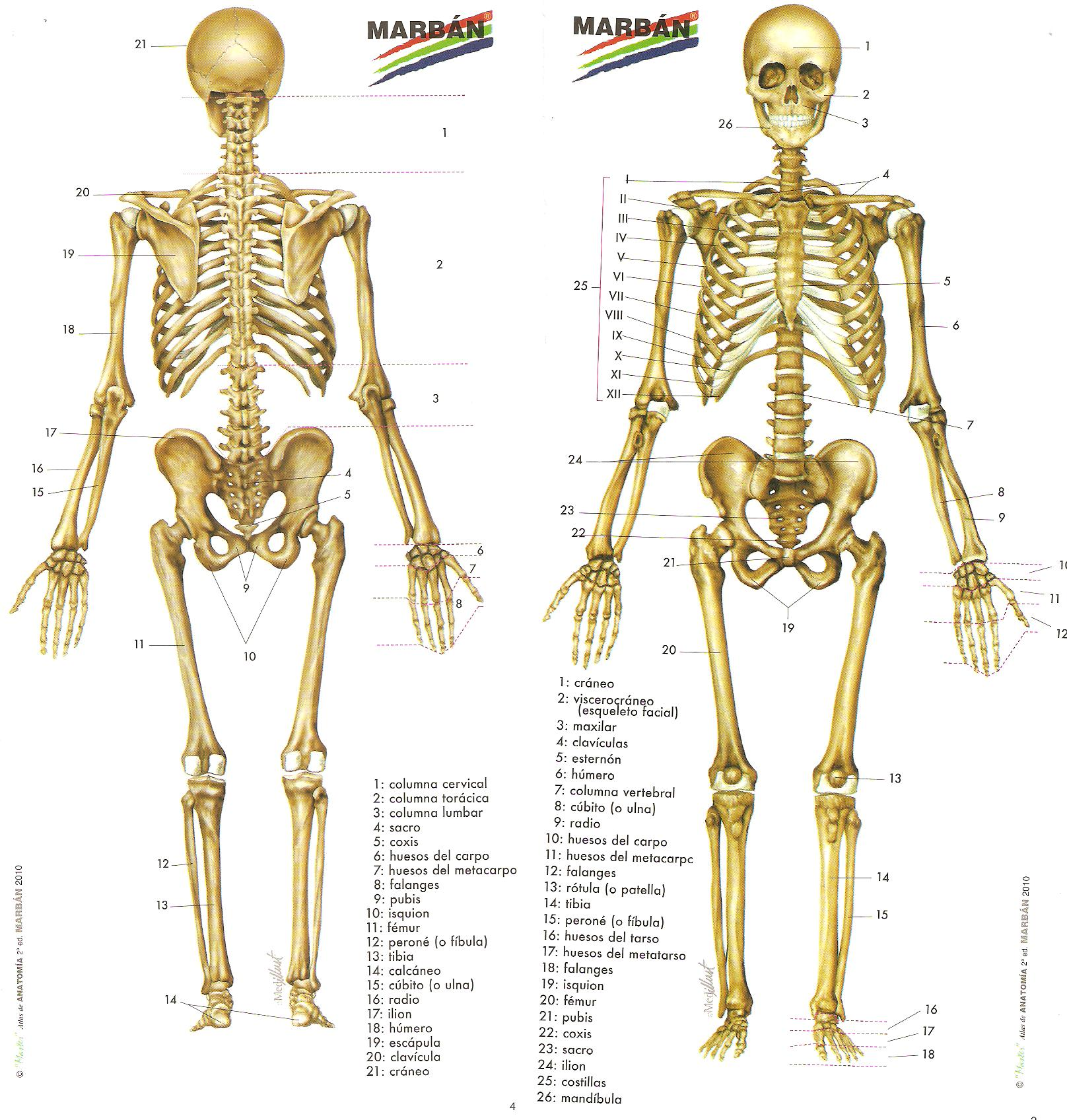 10 datos curiosos sobre el cuerpo humano | Taringa!